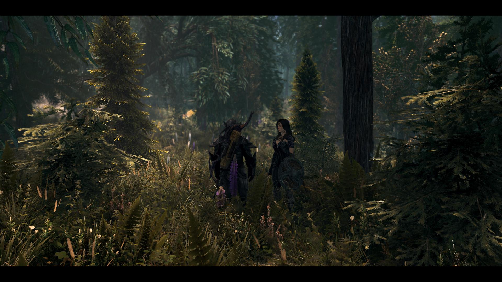 dense_forest.jpg