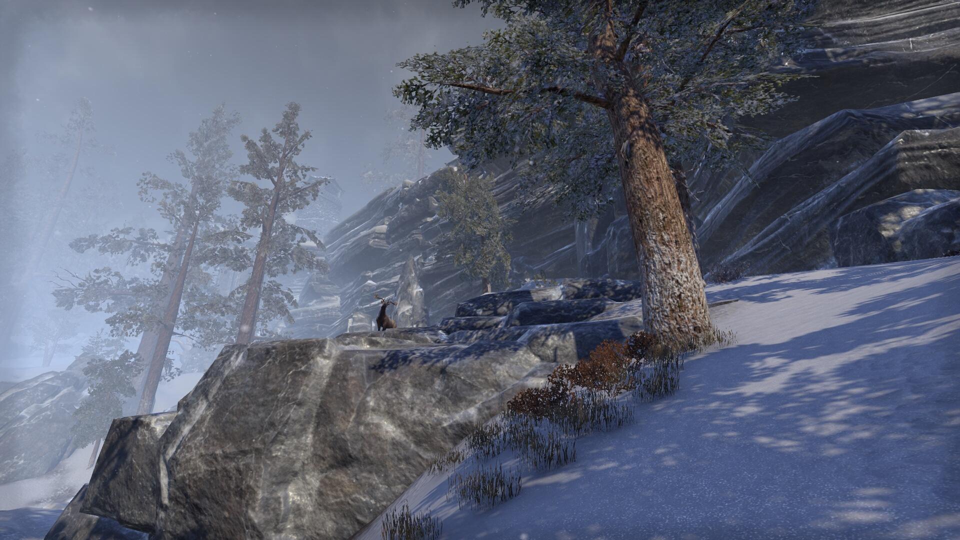 The Elder Scrolls Online_ Tamriel Unlimited (9).jpg